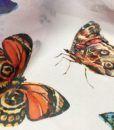 Шифон Бабочки